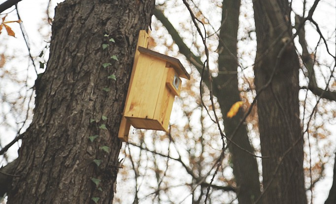 Eco-friendly bird houses for the gardens' residents